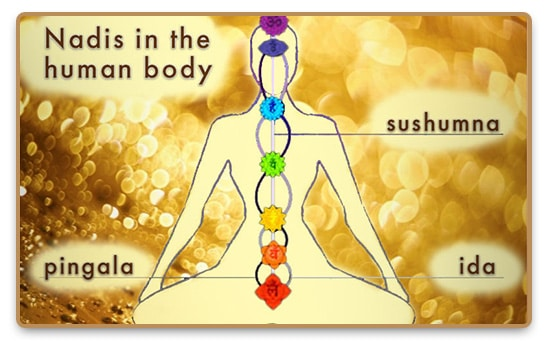 Sushumna, pingala, ida nadis and the seven chakras in the human body
