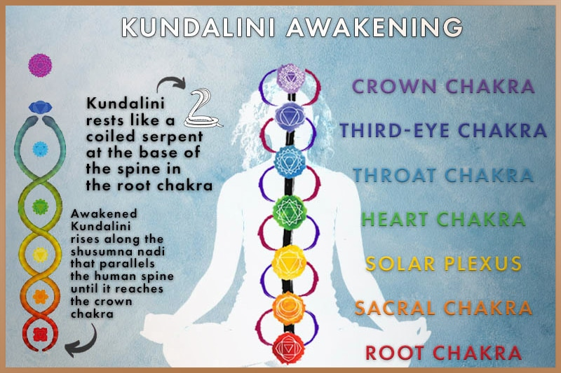 During Kundalini awakening the coiled serpent rises along the spine