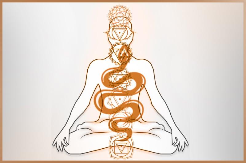 Kundalini energy rises from root chakra to crown chakra when awakened