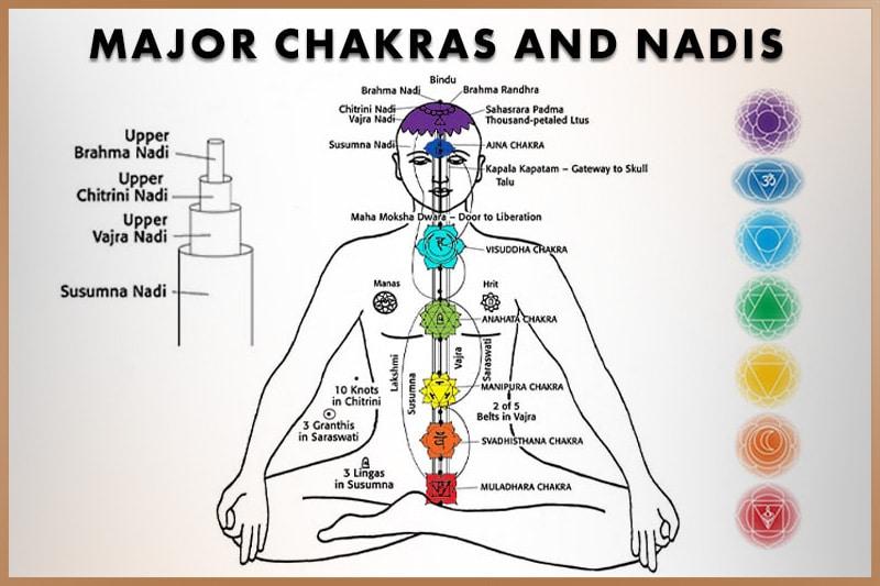 Nadis and chakras for energy flow