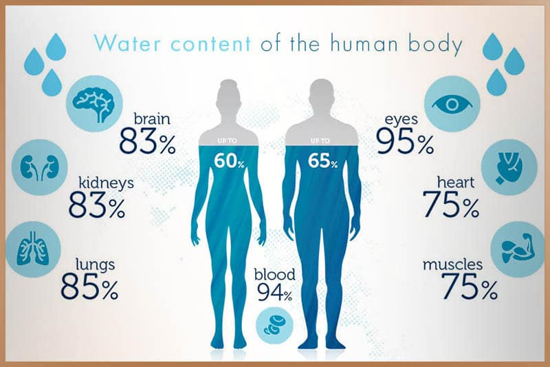 Water content of the human body